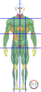Wing Chun centre line and gates on the human body with striking areas